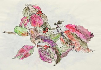 1355239_mareda-cheistk-sketch-of-leaves-pink-and-green